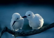 terns-for-website